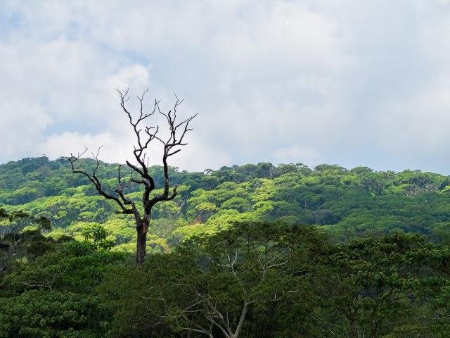 20160128_Sri_Lanka_4107_Sinharaja_Forest_Reserve_sRGB_(25468886730)